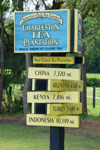 Charleston Tea Plantation image